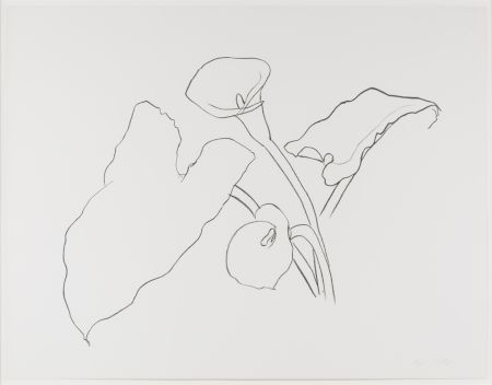 Lithographie Kelly - Calla Lily I