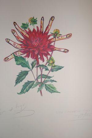 Lithographie Dali - Dahlias of Dalí (surrealistic flowers)