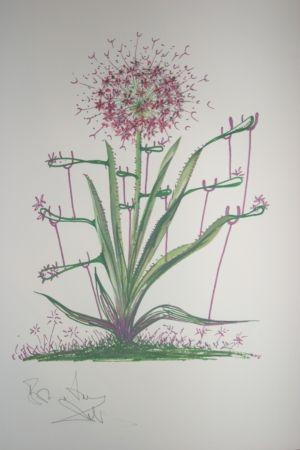 Lithographie Dali -  Desert Cactus (surrealistic flowers)
