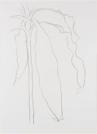 Lithographie Kelly - Dracena I