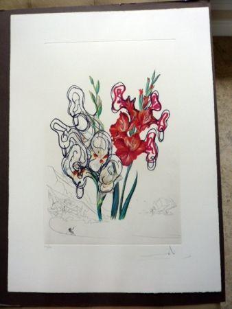 Kaltnadelradierung Dali - Gladiolas Plus Ears (Florals Suite)