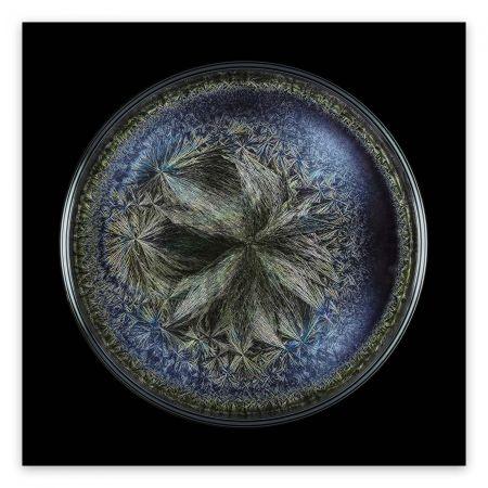 Fotografie Janiak - Morphogenetic field - Beluga Caviar