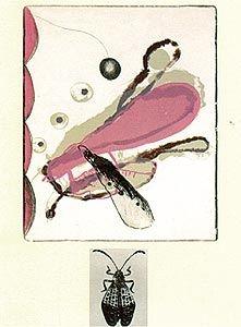 Lithographie Brown - Souvenirs entomologiques 6