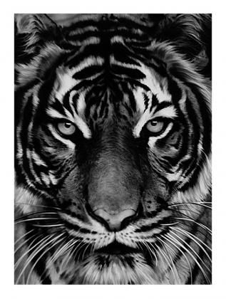 Lithographie Longo - Untitled (Tiger)