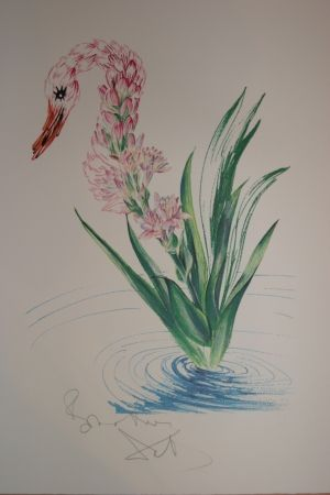 Lithographie Dali - Water-Hybiscus Swan (surrealistic flowers)