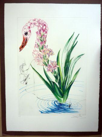 Stich Dali - Water Hibiscus Plus Swan (Florals)